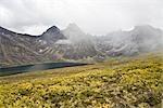 Weide Sträucher, Divide Lake, Tombstone Territorial Park, Yukon, Kanada