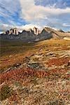 Heidelbeere Büsche und Mt Monolith, Tombstone Territorial Park, Yukon, Kanada