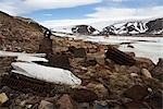 Artefakte und Wal-Knochen außerhalb einer verlassenen RCMP-Post, Craig Harbour, Nunavut, Kanada