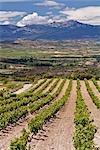 Vignoble de La Rioja, Espagne