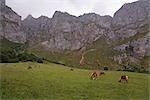 Horses in Field, Picos de Europa, Cantabria, Spain
