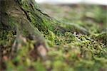 Tronc d'arbre bonsaï et Moss, jardins botaniques de Brooklyn, Brooklyn, New York City, New York, États-Unis