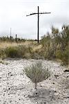 Plantes du désert et poteaux, Marfa, Presidio County, West Texas, Texas, USA