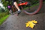 Leaf on Bike Path with Cyclists, Seattle, Washington, USA