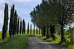Country Road, Tuscany, Italy