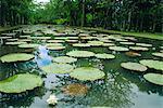Jardin botanique de pamplemousse, Ile Maurice