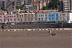 Woman, boy and dog, Weston-super-Mare, Somerset, England, United Kingdom, Europe Europe