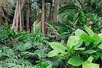Jardins botaniques, Puerto de la Cruz, Tenerife, îles Canaries, Espagne, Europe