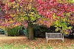 Bench under liquidambar tree, Hilliers Gardens, Ampfield, Hampshire, England, United Kingdom, Europe
