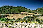 Corbiere vignobles près de Durban, Languedoc-Roussillon, France, Europe
