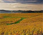 Vignobles près de Lentigne, Beaujolais-Rhone, Rhone Alpes, France, Europe