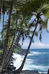 Plage de la Puna (sable noir), île d'Hawaii (Big Island), Hawaii, États-Unis d'Amérique, Pacifique, Amérique du Nord