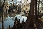 Sam Houston Jones State Park, Lake Charles, Louisiana, United States of America, North America