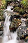 Chute d'eau, bois de Holme, Lake District, Cumbria, Angleterre, Royaume-Uni, Europe