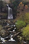 Thornton Kraft, Ingleton Wasserfälle walk, Yorkshire Dales National Park, North Yorkshire, Yorkshire, England, Vereinigtes Königreich, Europa