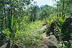 Les Hauts de Grand Anse, west coast, Island of Mahe, Seychelles, Indian Ocean, Africa