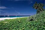 Nature reserve et la plage, Ile Aride (l'île d'Aride), Seychelles, océan Indien, Afrique