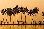 Palm Dyke, Allepy, Kerala, Inde