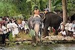 Elephant Festival,Kerala,India