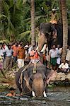 Elephant River Crossing,Kerala,India
