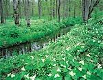 Fleurs qui poussent le long d'un ruisseau de forêt