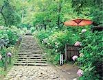 Escaliers à travers un jardin d'escalade