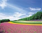 Jardin de fleurs sans fin