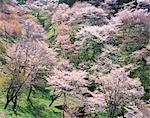 Mont Yoshino préfecture Nara