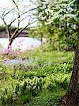Wildflowers Near a River, Prince Edward Island, Canada