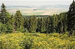 Domaine de randonnée, fleurs d'été pré alpin, Slovensky Raj, Parc National de paradis, Slovaquie, Europe