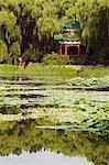Un pavillon parmi les nénuphars sur un lac à Yuanmingyuan (ancien palais d'été), Beijing, Chine, Asie