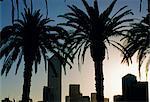 Silhouettes des palmiers et des bâtiments de la ville de Docklands, Melbourne, Victoria, Australie