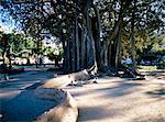 Piazza Marina, Palermo, island of Sicily, Italy, Mediterranean, Europe