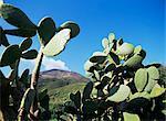 Stromboli, Iles Eoliennes (îles Liparia), l'UNESCO World Heritage Site (Italie), Méditerranée, Europe