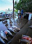 Marché aux poissons, Island, les îles Galapagos, en Équateur de St. James, en Amérique du Sud