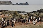 Jugulaire penguins, île Aitcho, Shetland du Sud îles, l'Antarctique, régions polaires