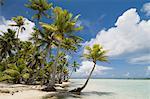 Blue Lagoon, Rangiroa, Tuamotu Archipelago, French Polynesia, Pacific Islands, Pacific