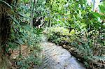 Forêt tropicale, Shaw Park, Ocho Rios, Jamaïque, Antilles, Amérique centrale