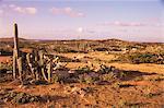 Alto Vista Cactus du désert, Aruba, West Indies, Antilles néerlandaises, l'Amérique centrale