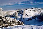 Roman Wall, Wallcrags to East, Northumbria, England, United Kingdom, Europe