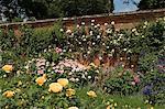 A rose border against a red brick wall, Mottisfont Abbey Garden, Hampshire, England, United Kingdom, Europe