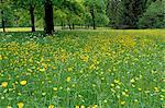 Prairie printemps temps, Karwendel, Bavière, Allemagne, Europe