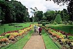 Peradeniya Botanical Gardens, Kandy, Sri Lanka, Asie