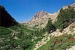 Gorges de la Restonica, Bergerie de Grottelle, Corse, France, Europe
