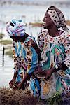 Two smiling Zanzibari women working in seaweed cultivation, Zanzibar, Tanzania, East Africa, Africa