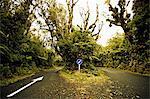Access road through native bush at Dawson Falls, where woodland is known as the Goblin forest, Egmont National Park, Taranaki, North Island, New Zealand, Pacific