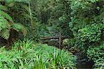 Brindle Creek, Border Ranges National Park, New South Wales, Australia, Pacific
