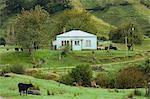 Colline de mudstone des terres agricoles, King Country, North Island, New Zealand, Pacifique