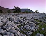 Kalk-Felspflaster in der Nähe von Chapel-le-Dale, Yorkshire Dales National Park, Yorkshire, England, Großbritannien, Europa