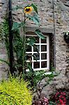 Haus und Sonnenblume, Yorkshire Dales National Park, Yorkshire, England, Vereinigtes Königreich, Europa
